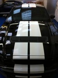 Bill Shepherd Mustang - GT 500